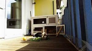 Himbeeren Auf Dem Balkon : das leben von bonnie clyde auf dem balkon kaninchen gopro hero 3 lustig spannend youtube ~ Eleganceandgraceweddings.com Haus und Dekorationen
