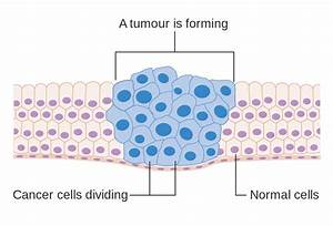 File Diagram Showing How Cancer Cells Keep On Reproducing