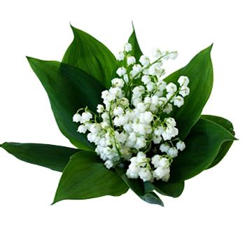 order wholesale of the valley flower at bulk prices
