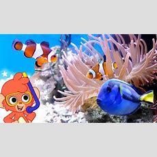 Sea Animal Videos For Kids  Learn Ocean Animals  Club Baboo Youtube