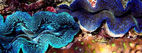 bureau louer guide thaïlande coraux et fonds marins