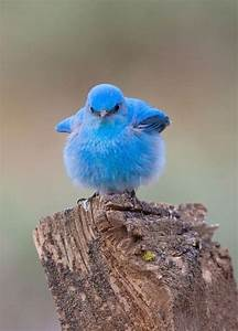 Happy fat bird | Cute Baby Animals | Pinterest
