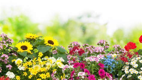 die beliebtesten gartenblumen im fruehling sommer herbst und winter