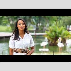 Programa Eco Record  Aves Amazônicas Youtube