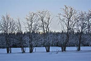 Bäume Im Winter : file b ume im wikimedia commons ~ Eleganceandgraceweddings.com Haus und Dekorationen