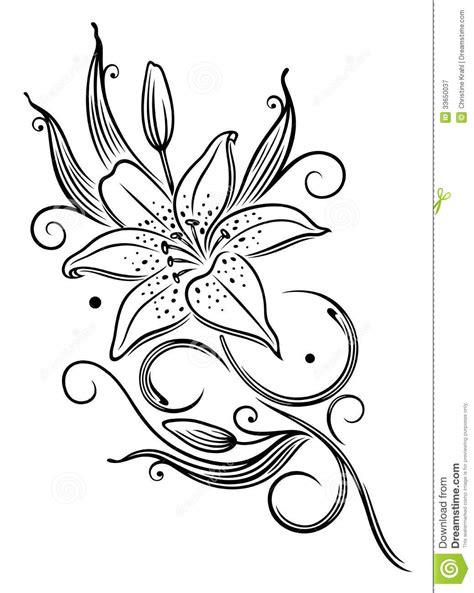 schwarze lilie blume lilie blume vektor abbildung illustration floral 33650037