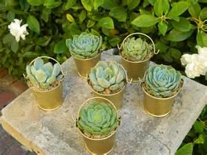 prizes for bridal shower succulent wedding favor succulent bridal shower favor by