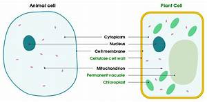 File Differences Between Simple Animal And Plant Cells  En