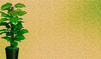 Plant Background Plants Powerpoint Pinsdaddy Hipwallpaper Backgrounds
