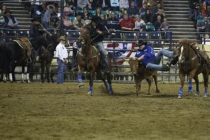 Western Rodeo National Animation Horse 2021 Shows