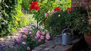 Rosen Und Lavendel : rosmarin lavendel rosen und salbei rosengarten pinterest lavender ~ Yasmunasinghe.com Haus und Dekorationen