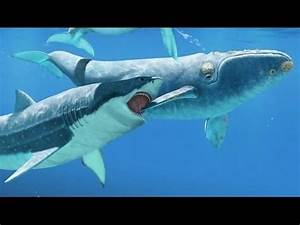 Image Gallery megalodon extinction
