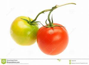 Green And Red Tomatoes Royalty Free Stock Photos - Image ...