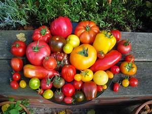 Tomaten Blätter Gelb : tomatensortiment 2013 zauberstaude ~ Frokenaadalensverden.com Haus und Dekorationen