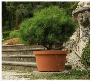 Dauerbepflanzung Für Balkonkästen : dauerbepflanzung mit kleiner kiefer das pflanzk bel blog ~ Frokenaadalensverden.com Haus und Dekorationen
