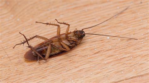 Insekten Im Haus Erkennen by Sch 228 Dlinge Im Haus