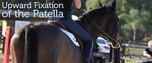 Upward Fixation Of The Patella