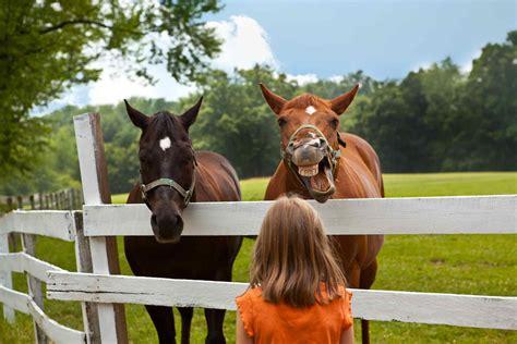 horses funny