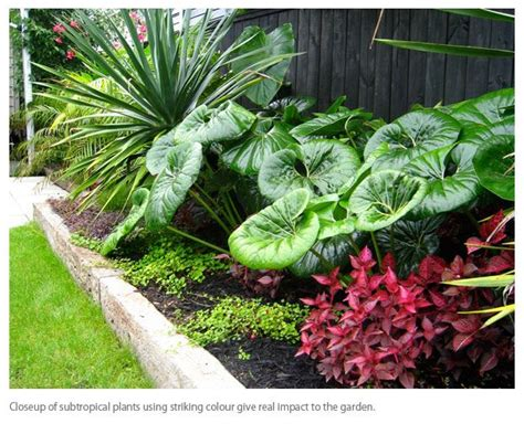 subtropical garden design ideas 280 best images about tropical landscape ideas on pinterest best bali garden agaves and