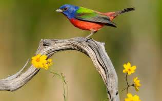 Beautiful Desktop Birds