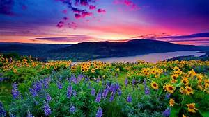 Nature Landscape Yellow Flowers And Blue Mountain Lake ...