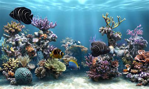 fond aquarium