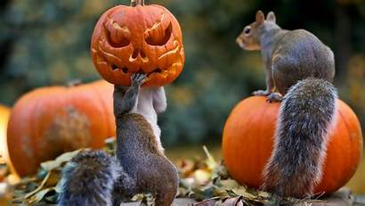 Pumpkin Backgrounds Squirrels Mask Halloween Wallpapertag