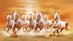 Beautiful White Horses Galloping Orange Sunset Sky Ultra ...