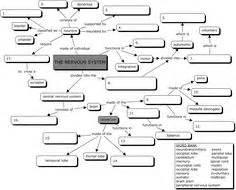 concept map cellular respiration cellular respiration