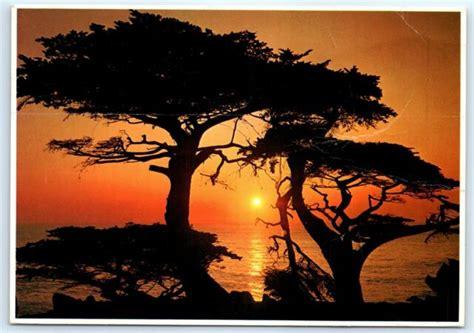 Postcard Ca 1977 Monterey Sunset Photo B4 Ebay