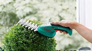 Wann Buxbaum Schneiden : buchsbaum kugel schneiden bux schneiden bux formvollendet ~ Lizthompson.info Haus und Dekorationen
