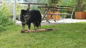Hund Im Haus : ferienh user in schwerin das haus am see ~ Lizthompson.info Haus und Dekorationen