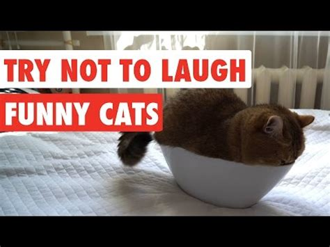 Vote No On  Try Not To Laugh Or Grin Funny Cat