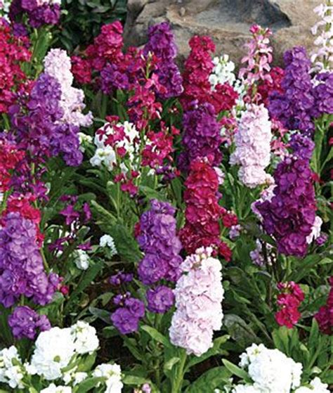 stock plant stock harmony mix the best choice for an authentic