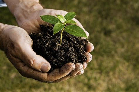 caring for trees nuevos creyentes alianza samborond 243 n
