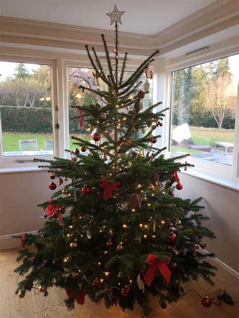 customer gallery send   christmas tree