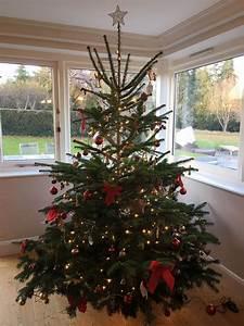 Weihnachtsbaum Schmücken Anleitung : customer gallery send me a christmas tree ~ Watch28wear.com Haus und Dekorationen