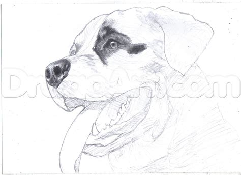 draw  realistic rottweiler step  step pets