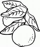 Lemon Coloring Clipart Pages Cartoon Lemons sketch template