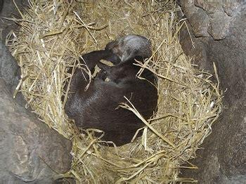 eurasian otter habitat diet lifespan facts studycom