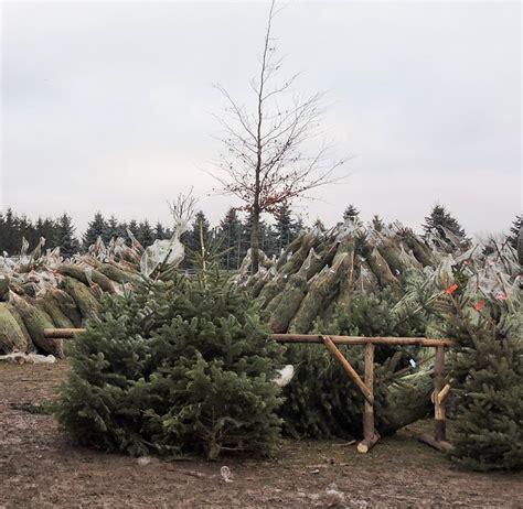 weihnachtsbaum k 252 nstlich oder echt kaufen oder selbst
