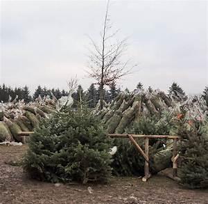 Weihnachtsbaum Kuenstlich Wie Echt : weihnachtsbaum k nstlich oder echt kaufen oder selbst ~ Michelbontemps.com Haus und Dekorationen