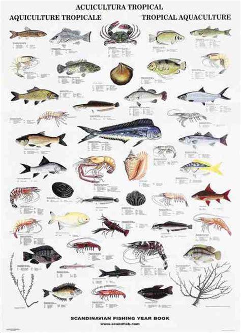 fish names list  picture list  fish