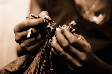 filehandmade cigar production process tabacalera de