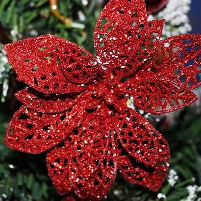 Ornament Ornaments Poinsettia Decoration Ipad Parallax Retina