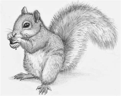 pencil drawings  animals ill draw