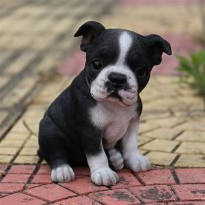 Hi-Line Gift Ltd Sitting Boston Terrier Puppy Statue