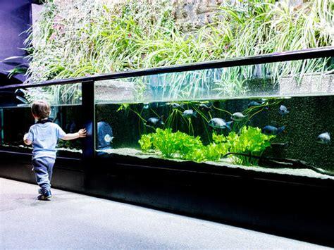 aquarium tropical du palais de la porte dor 233 e portail des professionnels du tourisme 206 le
