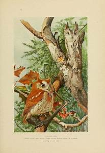 n40_w1150 | Bird and Illustrations