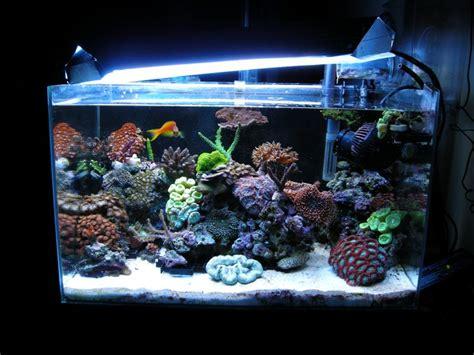 aquarium eau de mer complet pas cher nano aquarium r 233 cifal eau de mer 58 litres complets